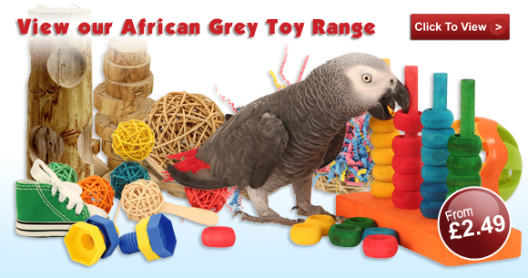 View Toys for African Greys