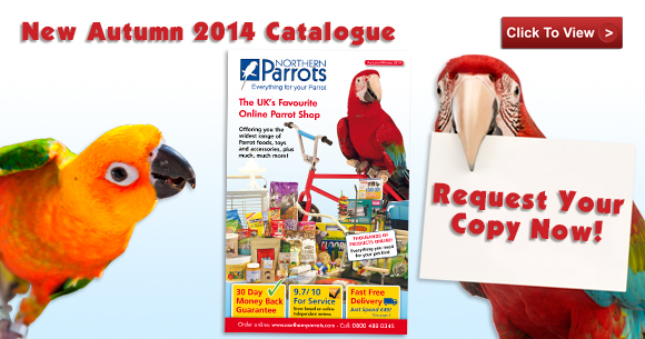 NEW Autumn Catalogue - OUT NOW