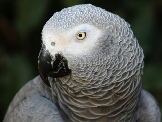 blog african grey day image4550w
