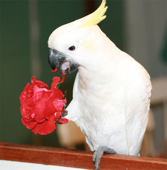 Bird Enrichment Toys : Enrichment or how to keep your parrot happy
