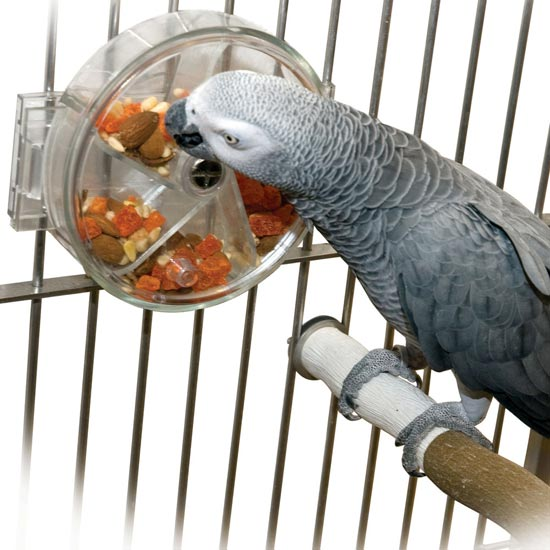 Bird Enrichment Toys : Enrichment for your parrot