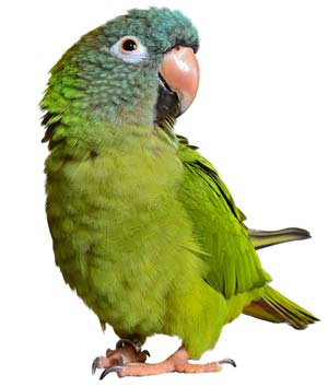 blog macaw day image five
