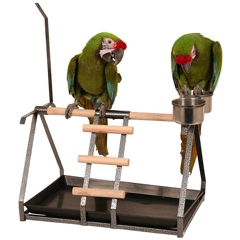 Parrot Table Top Play Stand: Tabletop Parrot Stand With Toy Hanger & Feeder