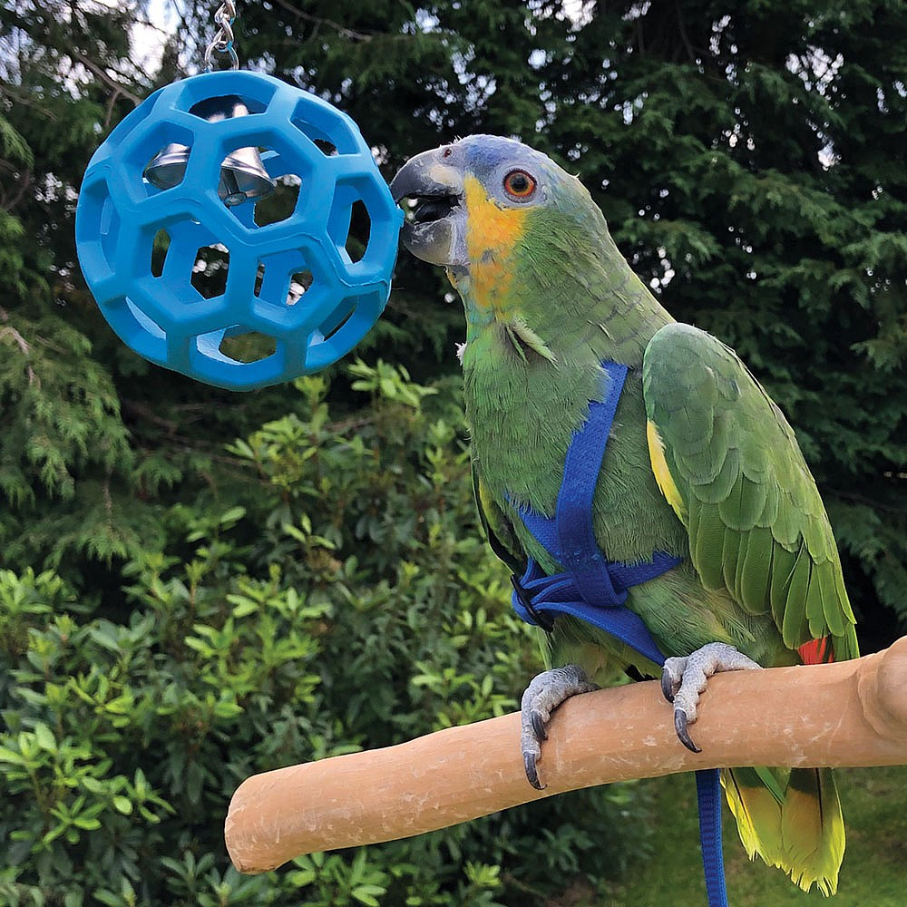 Toys For Birds : Hol ee roller foraging toy for parrots