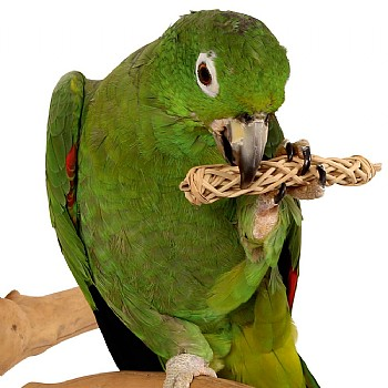 Natural Chews for Parrots - Pack of 6