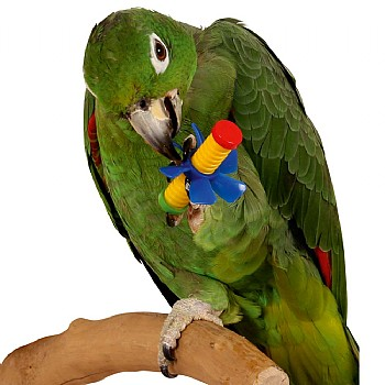 Wing Nuts Parrot Puzzle Foot Toys - Pack of 3