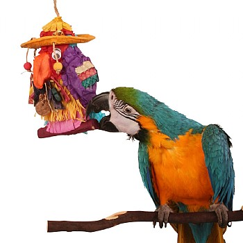 Pete the Parrot Ulitmate Pinata Parrot Toy - Fill Your Own