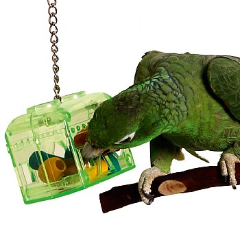 Treasure Hunt Parrot Foraging Toy & Refill Pack