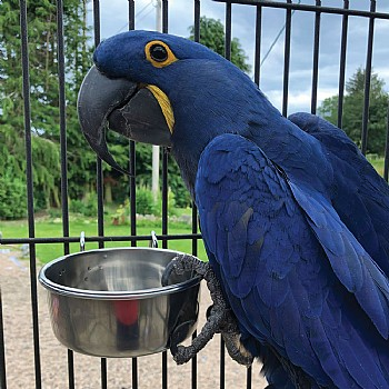 Stainless Steel Coop Cup & Hanger - Medium Parrot Bowl