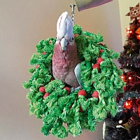 Cotton Christmas Wreath Parrot Toy