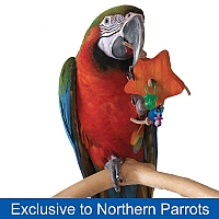 Chunky Star Parrot Foot Toy
