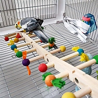 Challenge Ladder Activity Parrot Toy - Medium