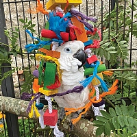 Knotty Stacker Wood And Rope Parrot Toy