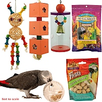 Foraging Toys & Treats Kit Offer