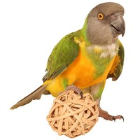 Munch Balls - Woven Willow Chew Toy for Parrots