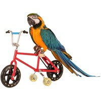 Parrot Bike - Trick Toy