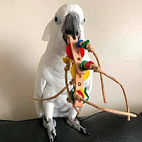 Rollicking Foot Toy for Parrots