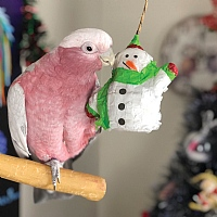 Mini Snowman Pinata - Chewable Foraging Toy for Small Parrot