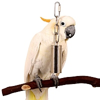 Stainless Steel Bell Parrot Toy - Medium
