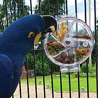Original Foraging Wheel - Interactive Creative Parrot Toy