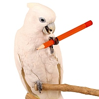 Parrot Pencil Foot Toy - Small