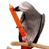 Parrot Pencil Foot Toy - Large