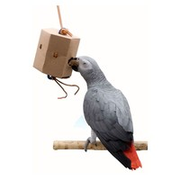 Seek `n` Find Foraging Box for Parrots - Pack of 5 - Large