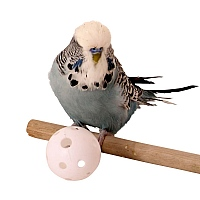 Plastic Wiffle Balls - Parrot Toy Making Parts - Pack of 6