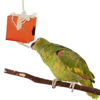 Seek & Chew Foraging Toy for Parrots - Large