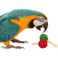 Parrot Popsicle Foot Toys - Pack of 6