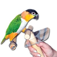 Buddy Perch - Large - Parrot Perch with Hand Protection