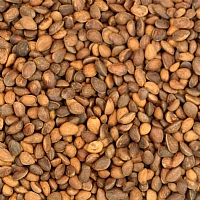 Cedar Nuts Parrot Treats - 250g