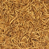 Johnston & Jeff Dried Mealworms