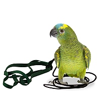 The Aviator Parrot Harness - Small
