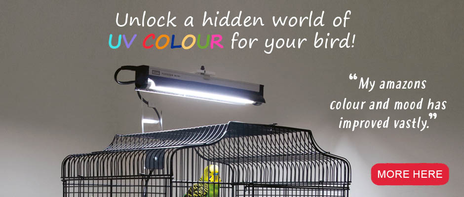 Click to order lighting