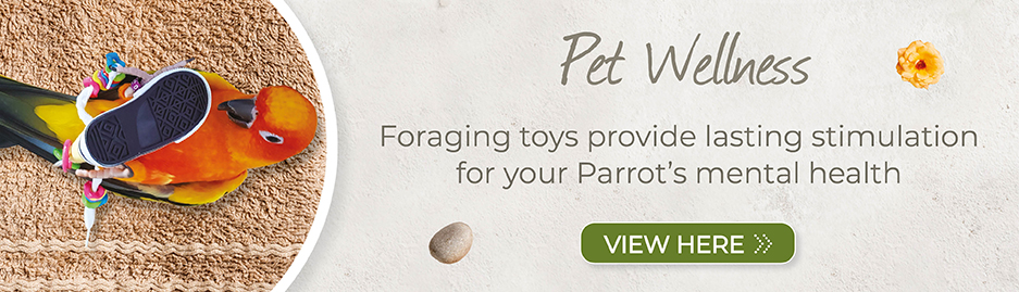 Click to order chewable foraging toys