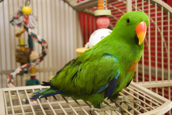 Choosing a Parrot Cage