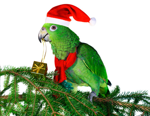 Christmas parrot toy