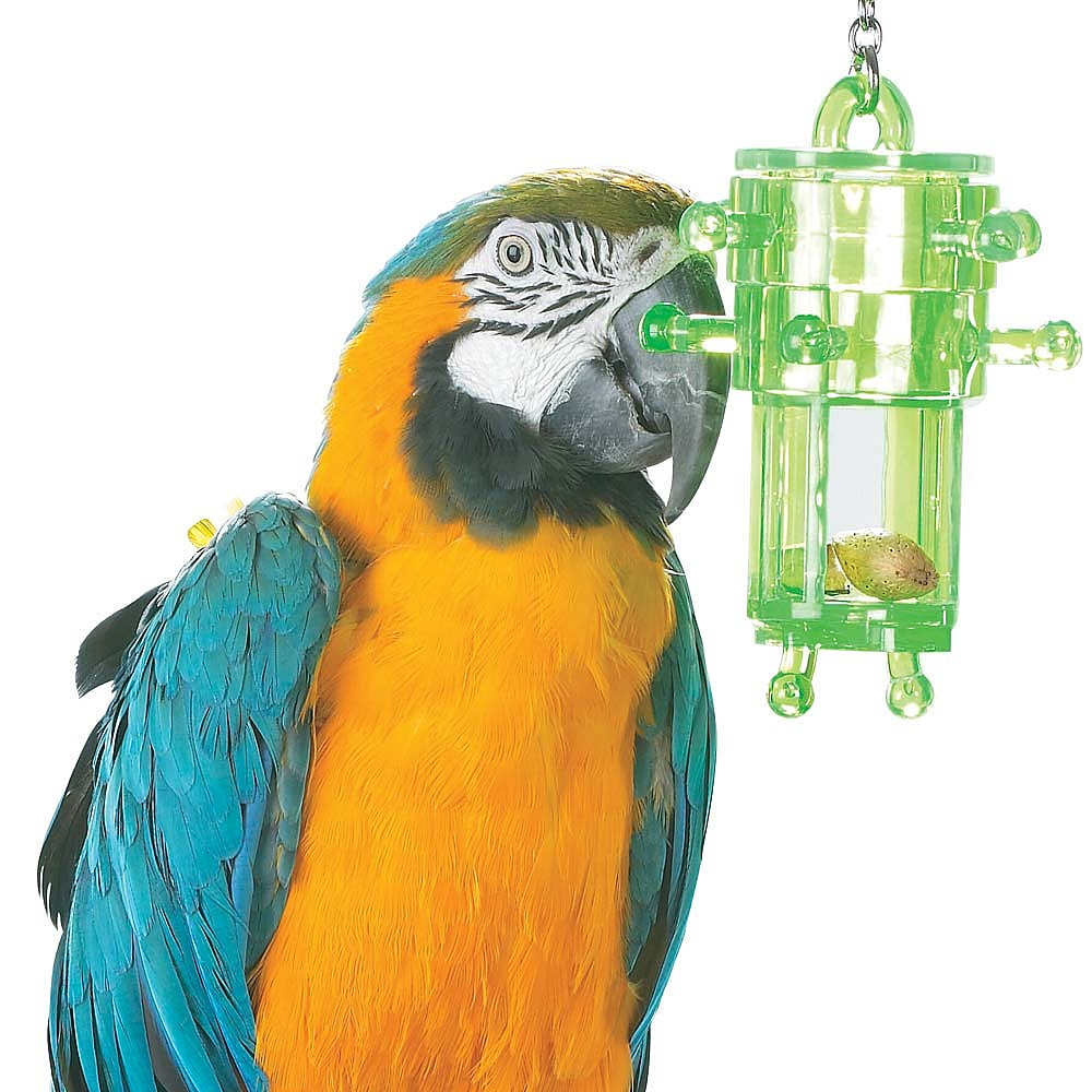 Foraging toys for parrots