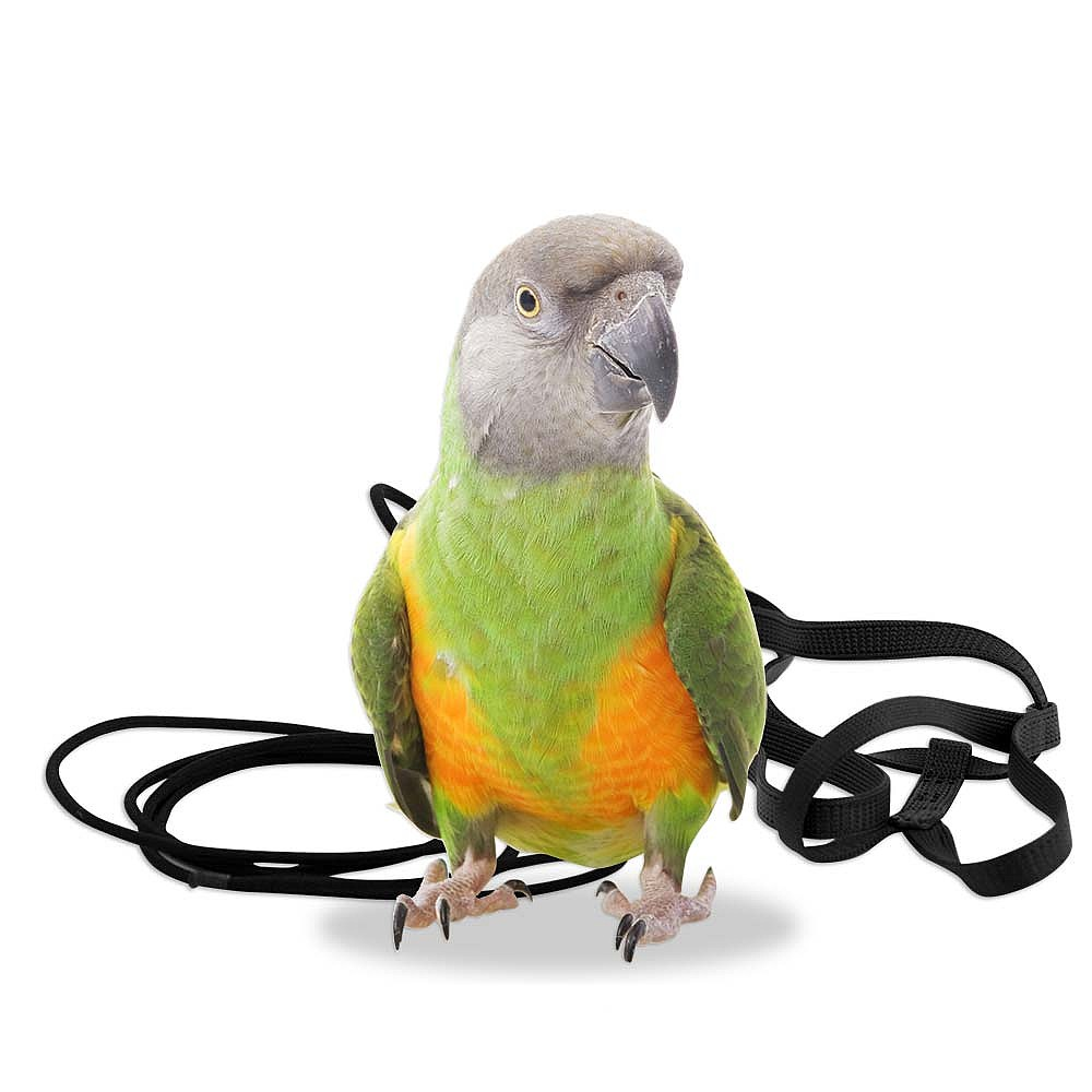 83921a the aviator parrot harness xsmall
