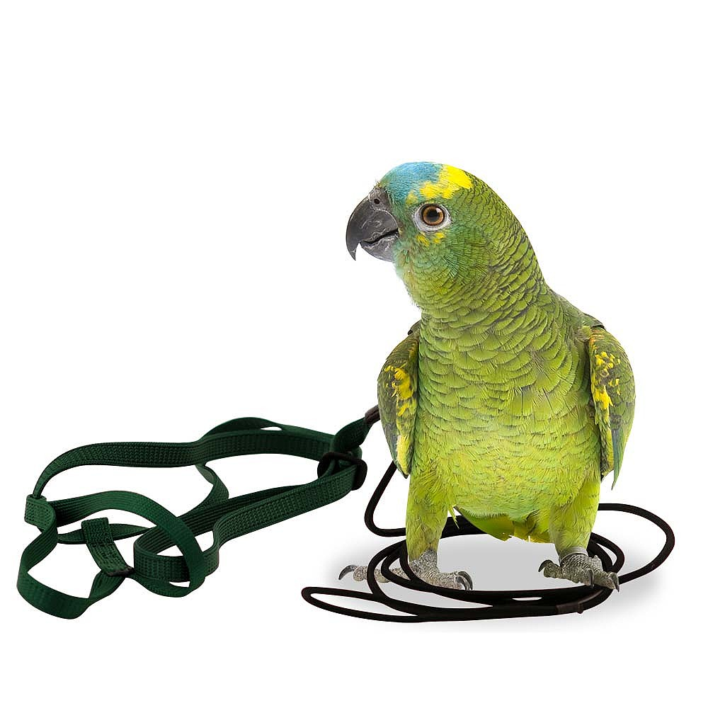83931a the aviator parrot harness small