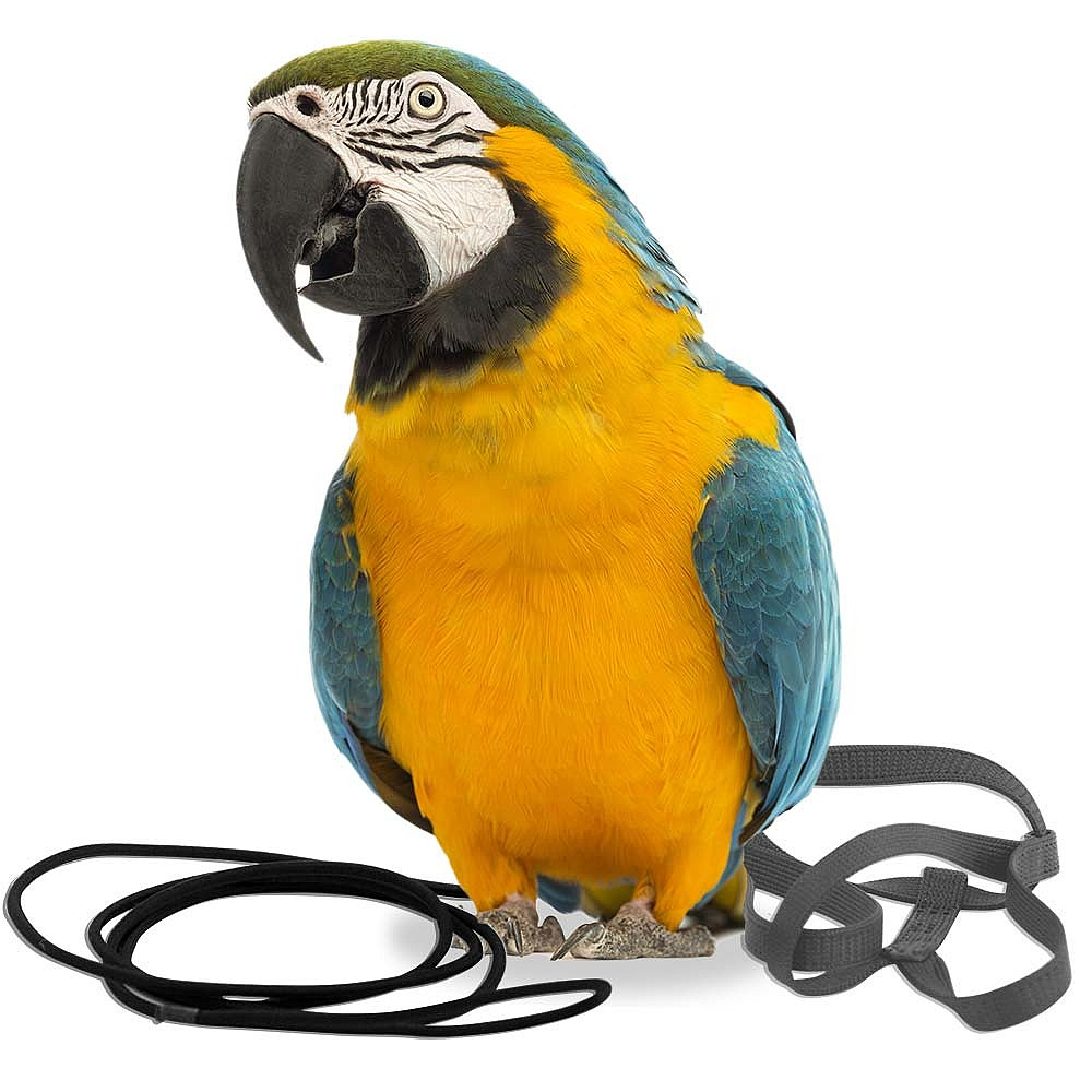 83951a the aviator parrot harness large