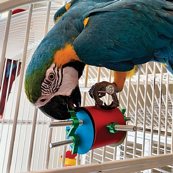 The Busy Barrel Foraging Puzzle Parrot Toy