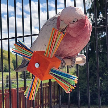 Party Spinner Play Perch Parrot Toy