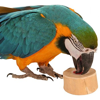 Jelly Cups Parrot Treat Holder