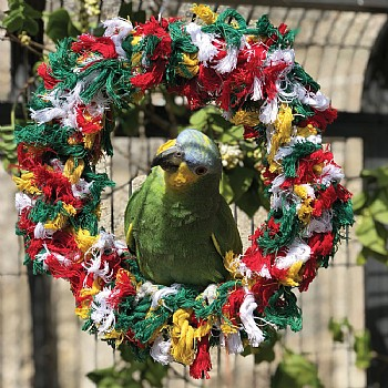 Northern Parrots Rainbow Ring Parrot Swing