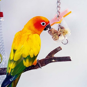 Super Star Parrot Foraging Toy