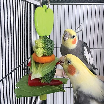 Northern Parrots Kabob Parrot Treat Holder