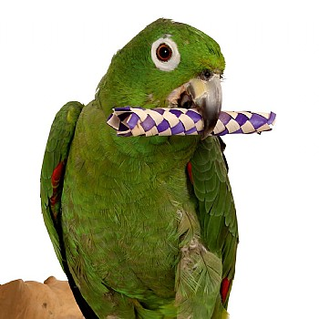 Woven Paper Sticks - Foot Toys for  Parrots  - Pack of 12