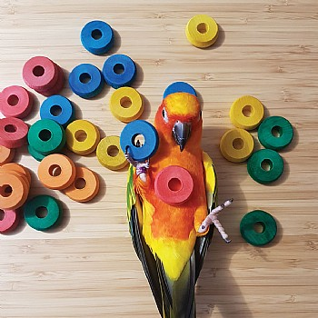 Coloured Wooden Discs - Parrot Toy Making Parts